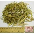 Астрагал розовый трава (Astragalus roseus ledeb)