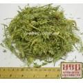 Астрагал датский трава (Astragalus danicus Retz)
