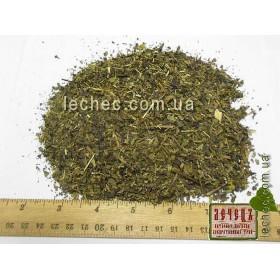 Базилик (Ocimum basilicum)