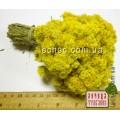 Бессмертник песчаный, цмин-цветки (Helichrysum arenarium)
