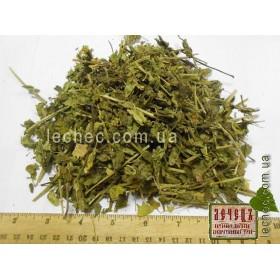 Будра плющевидная трава (Glechoma hederacea)