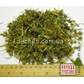 Череда трехраздельная трава (Bidens tripartita)