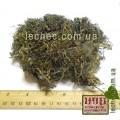 Цистозейра бородатая водоросли (Cystosira barbata)