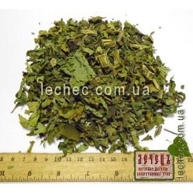 Дурнишник обыкновенный трава (Xanthium strumarium)
