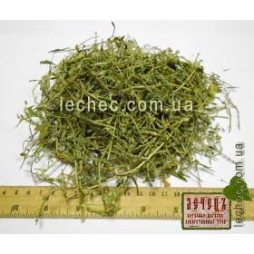 Горец птичий, спорыш трава(Polygonum aviculare)