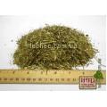 Иссоп лекарственный трава (Hyssopus officinalis)