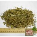 Лабазник вязолистный, таволга трава с цветом (Filipendula ulmaria Maxim)