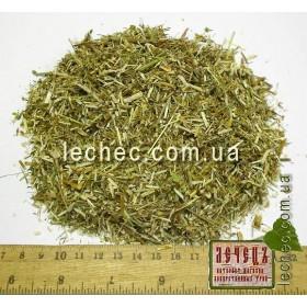 Клевер красный трава (Trifolium pratense)