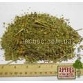 Пижма обыкновенная цвет с листом (Tanacetum Vulgare)