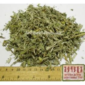 Шалфей лекарственный трава (Salvia officinalis)