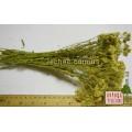 Тысячелистник обыкновенный трава (Achillea millefolium)