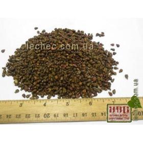 Виноградная  косточка (Vitis vinifera)