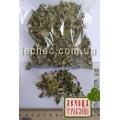 Ваточник сирийский, или Эскулапова трава, Млечная трава, Ласточкина трава, чумацкая трава, Асклепиас (Asclepias syriaca)