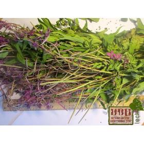 Иван-чай, кипрей узколистный трава (Chamaenerion angustifolium (L.)