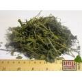 Крапива двудомная трава (Urtica dioica)