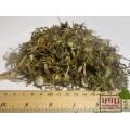 Одуванчик лекарственный трава (Taraxacum)