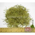Грыжник гладкий, голый, трава (Herniaria glabra).