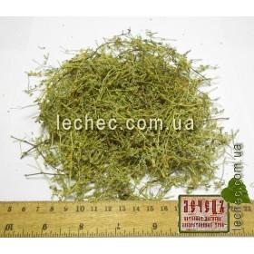 Грыжник гладкий, голый, трава (Herniaria glabra). ТОВАРА НЕТ В НАЛИЧИИ!!!