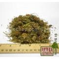 Клевер красный соцветие (Trifolium pratense)