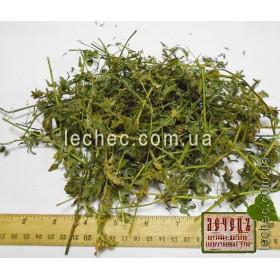 Люцерна посевная трава (Medicago sativa)