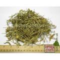 Пастушья сумка трава (Capsella bursa pastoris (L.) Medik)