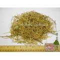 Ромашка аптечная трава (Matricaria recutita)
