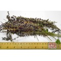 Шалфей дубравный трава (Salvia nemorosa)
