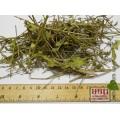 Вербена лекарственная трава (нехворощ, зализняк) (Verbena officinalis L.)