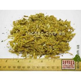 Золотарник обыкновенный, золотая розга трава (Solidago virgaurea)