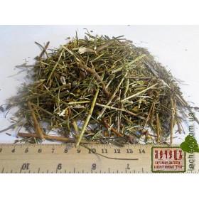 Зверобой продырявленный трава (Hypericum perforatum)