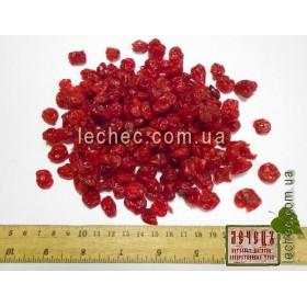 Вишня цукат (Prunus subg. Cerasus)