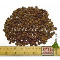 Кофе в зернах Арабика Loja (Лоха) (Coffea arabica L.)