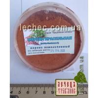 Марена красильная (Rubia tinctorum L)