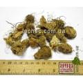 Аронник пятнистый клубни (Arum maculatum).