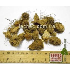 Аронник пятнистый клубни (Arum maculatum). ТОВАРА НЕТ В НАЛИЧИИ!!!