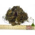 Чистотел большой корень (Chelidonium majus)
