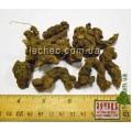 Лапчатка прямостоячая, калган корень (Potentilla erecta (L.) Raeusch.)