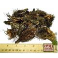 Красная щетка (родиола холодная) корень  (Rodiola guadrefida)