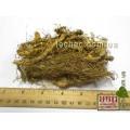 Купена лекарственная корень (Polygonatum odoratum (Mill.)