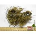 Левзея сафлоровидная (маралий корень) (Rhaponticum carthamoides)