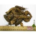 Родиола розовая (золотой корень) (Rhodiola rosea)