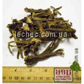 Стальник полевой корень (Ononis arvensis)