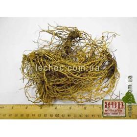 Василистник малый корень ( Thalictrum minus)