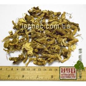 Ясенец кавказский корень (Dictamnus caucasicus)