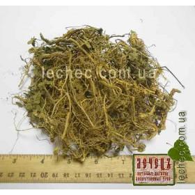 Фиалка душистая трава с корнем и цветом (Viola odorata)