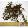 Лапчатка белая корень (Potentilla alba)