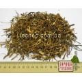 Толокнянка корень (Arctostaphylos uvae-ursi Spreng)