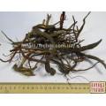 Воробейник лекарственный (Lithospermum officinalis L.) корень