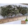 Виноградный лист (Uvam folium)
