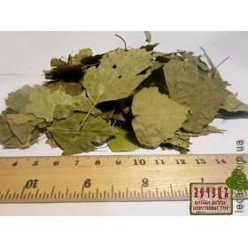Береза лист (Betula)
